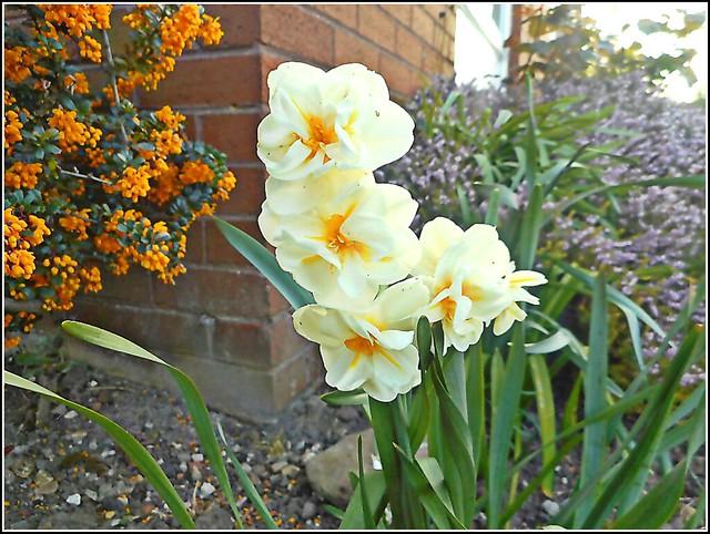 Springtime Flowers ..