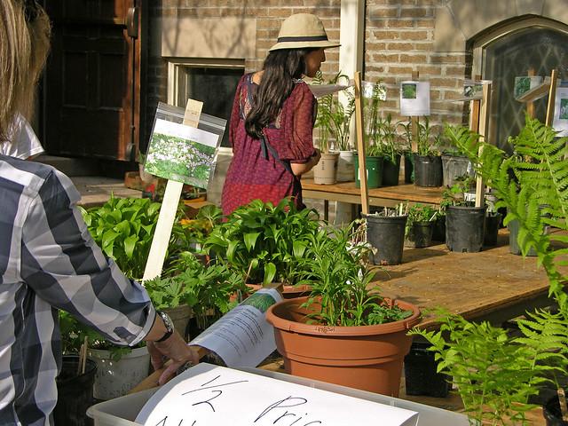 Judson Street Fest 2013 plant sale