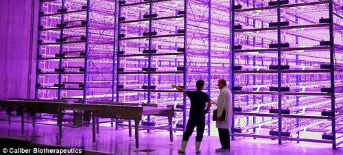 LED-лампы позволят круглый год собирать урожай внутри городских складов