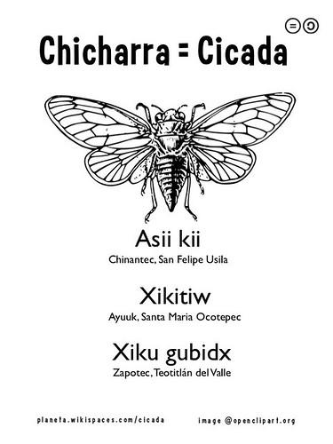 Chicharra = Cicada