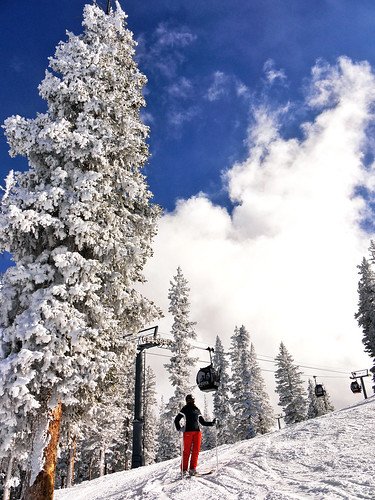 winter usa snow rockies colorado skiresort rockymountains ajax aspen snowytrees powday
