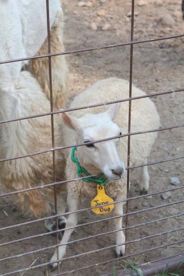 Petting Zoo, 14
