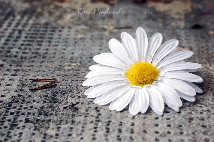 Flower 4 4 bis bis