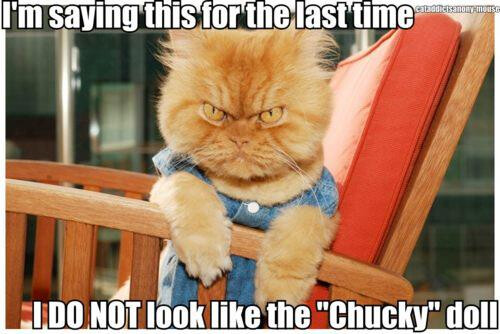 Chucky Cat