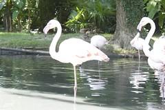 swan(0.0), ducks, geese and swans(0.0), animal(1.0), fauna(1.0), waterfowl(1.0), beak(1.0), flamingo(1.0), bird(1.0), wildlife(1.0),