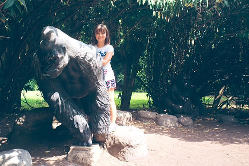 Gorilla time.