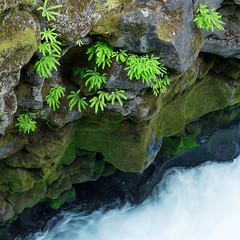 Oregon/California 2013
