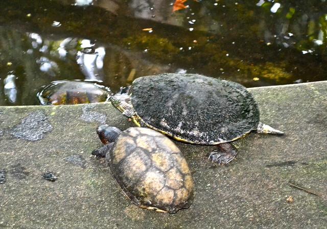 Turtles at the hatchery - Monterrico, Guatemala