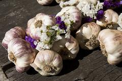 2013 Garlic Festival