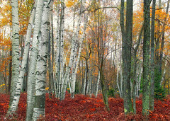 Marion Brooks Natural Area (Revisit) (2)