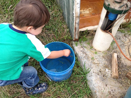 Catching Frogs - 2