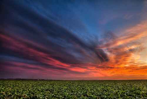 Sunset over a Lettuce Field on Monterey Bay