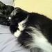 mummy cat by shimmyblisster