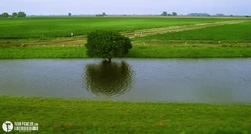 Campo inundado by Ivan Pawluk