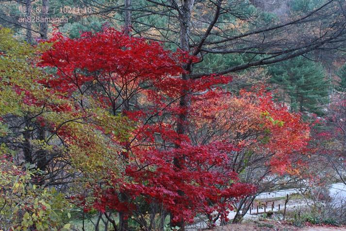 156韓國京畿道晨靜樹木園