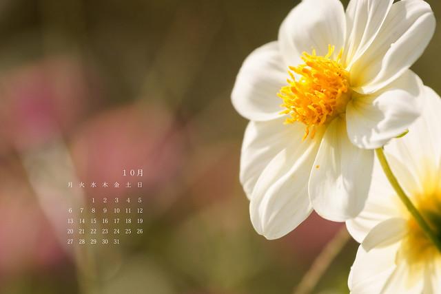 写真_10月のカレンダー