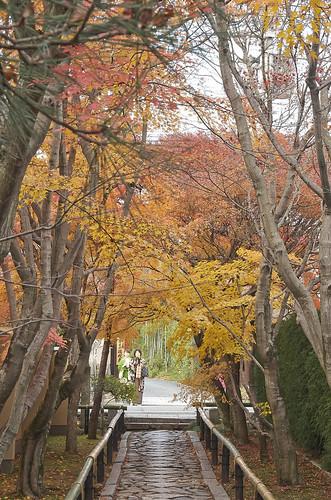 【写真】2013 紅葉 : 光悦寺/2013-12-02/IMGP4446