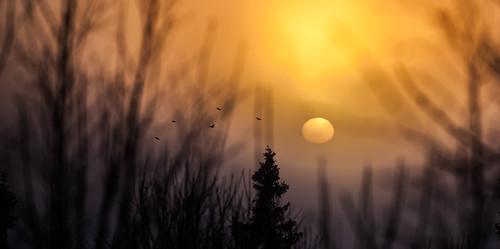 friends sunset sun birds oslo norway photography norge flickr favorites views comments noreg voksen voksenkollen voksenåsen canon5dmarkii canonef70200mmf28lisiiusm matsanda bhalalhaika