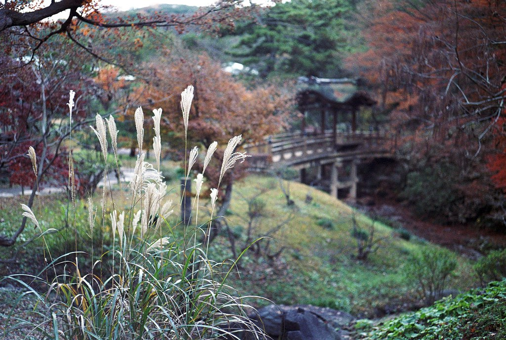 Sankeien in autumn