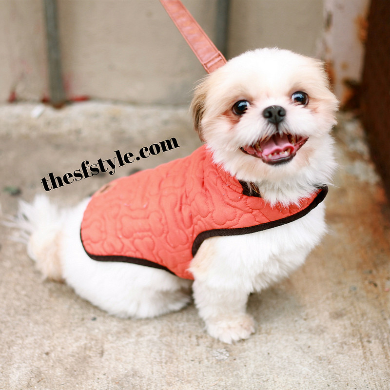 puppy couture, new york streetstyle fashion blog, STREETFASHIONSTYLE, street fashion style,