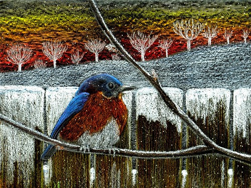 Bluebird Dawn