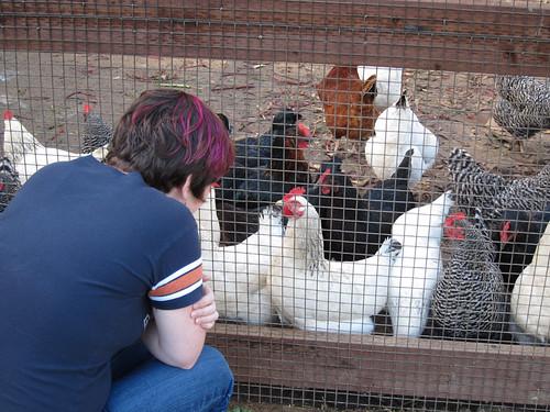 Applewood Inn chickens