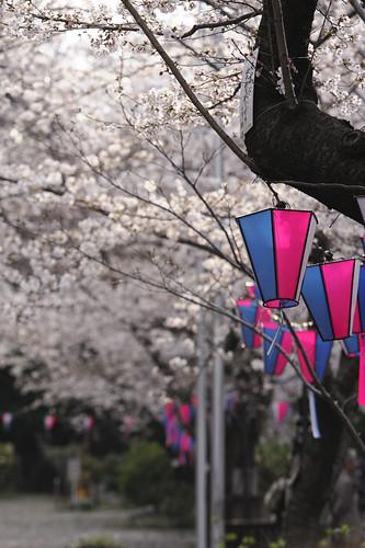 英霊に桜大樹を献じけり