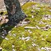 Moss Atop Pinnacle Rock