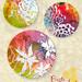 Petra_vanderLem_FiestaSucculents_3A_week2 by catchydesign