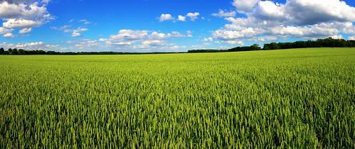 blue panorama green field clouds germany landscape skies wheat saxony farming crops dornreichenbach
