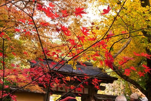 【写真】紅葉 : 寂光院