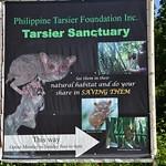 Tarsier sanctuary, Corella