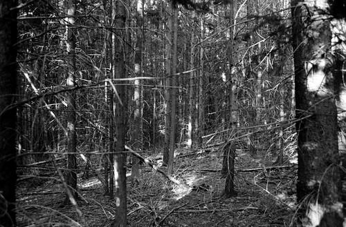Trees on Tri-X
