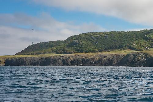【写真】2013 : 知床半島遊覧船-往路2/2020-09-01/PICT2281