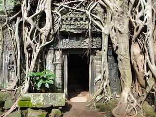 Ta Prohm, Angkor, Cambodia - ប្រាសាទតាព្រហ្ម, អង្គរ, កម្ពុជា