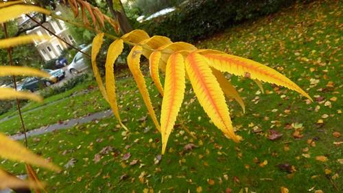 One fall branch width=