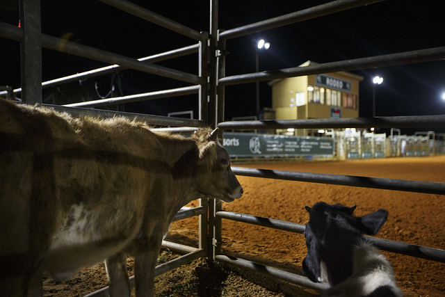 westgate river ranch scott audette for visit florida