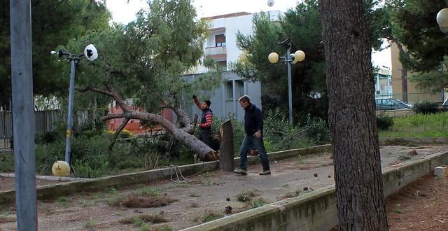 parco giochi polignano alberi segati