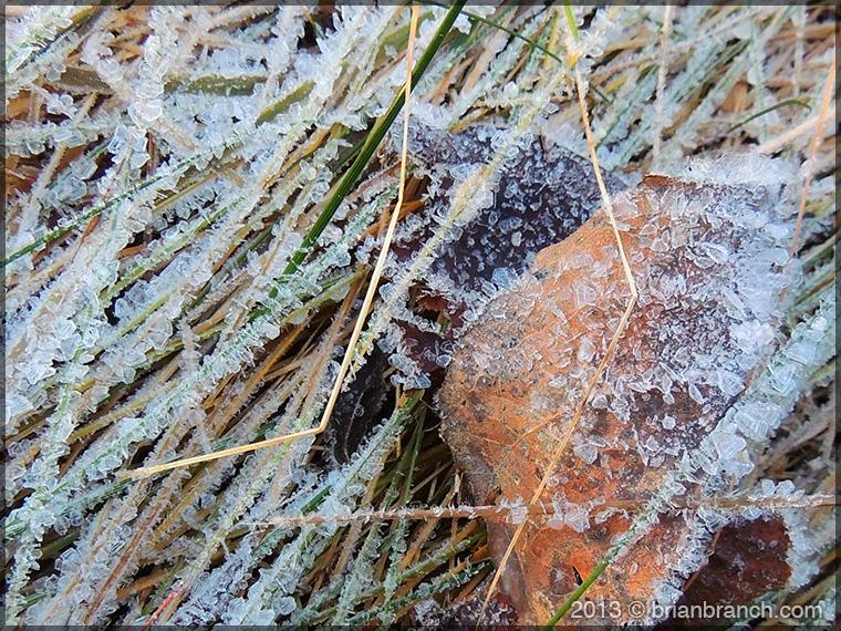 DSCN4874_frost