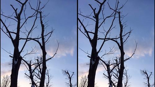 [Daily Cha cha S3-D] 冬の木立、平行法。