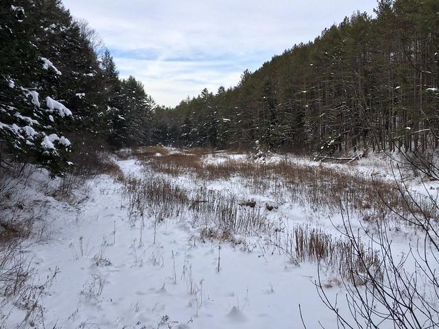 Bill Ballard Trail, Norwich, Snowshoeing, Vermont