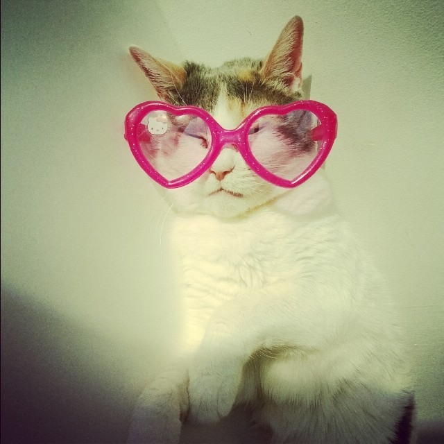 Put Hello Kitty glasses on her to block the sun.  #cats #hellokitty