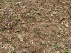 Dirt_cliffedge-rocks-plants-sticks-roots_wide-3.jpg