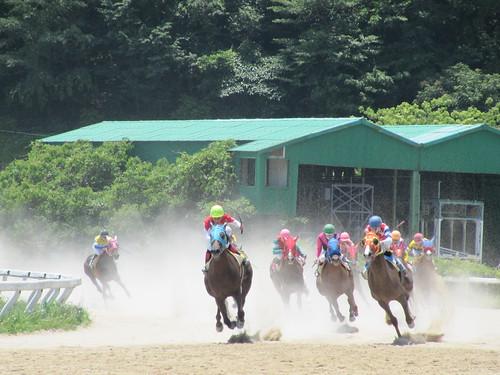 佐賀競馬場のレースの様子
