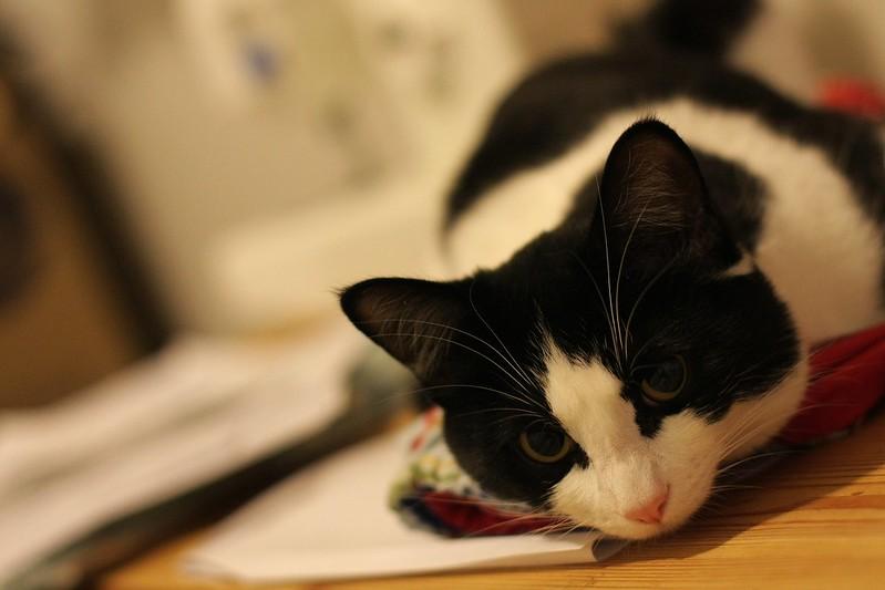 my sewing helper