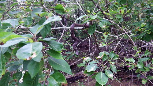 Snake in a branch