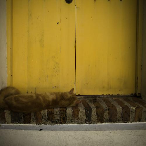 El Gato Siesta, Old San Juan, Puerto Rico
