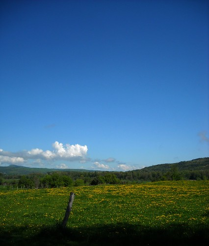 blue sky cloud green grass yellow fence spring day post meadow dandelion projectweathersubmission pwpartlycloudy