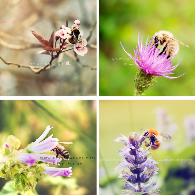 +abejas collage
