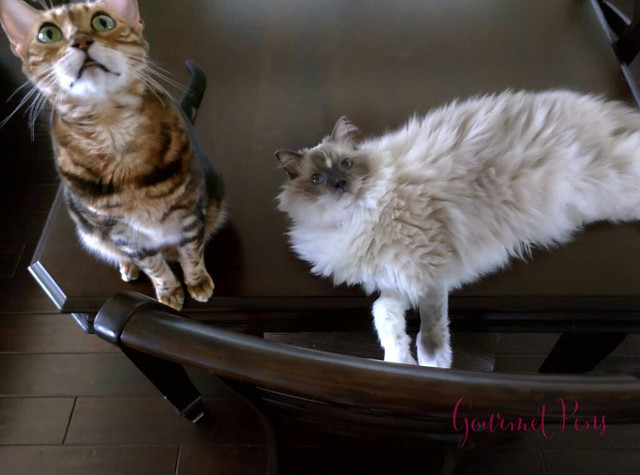 Whiskers & Paws July 2016 Edition (6)